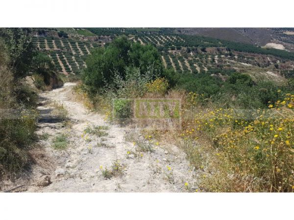 For Sale - GALIPE (STERNES)